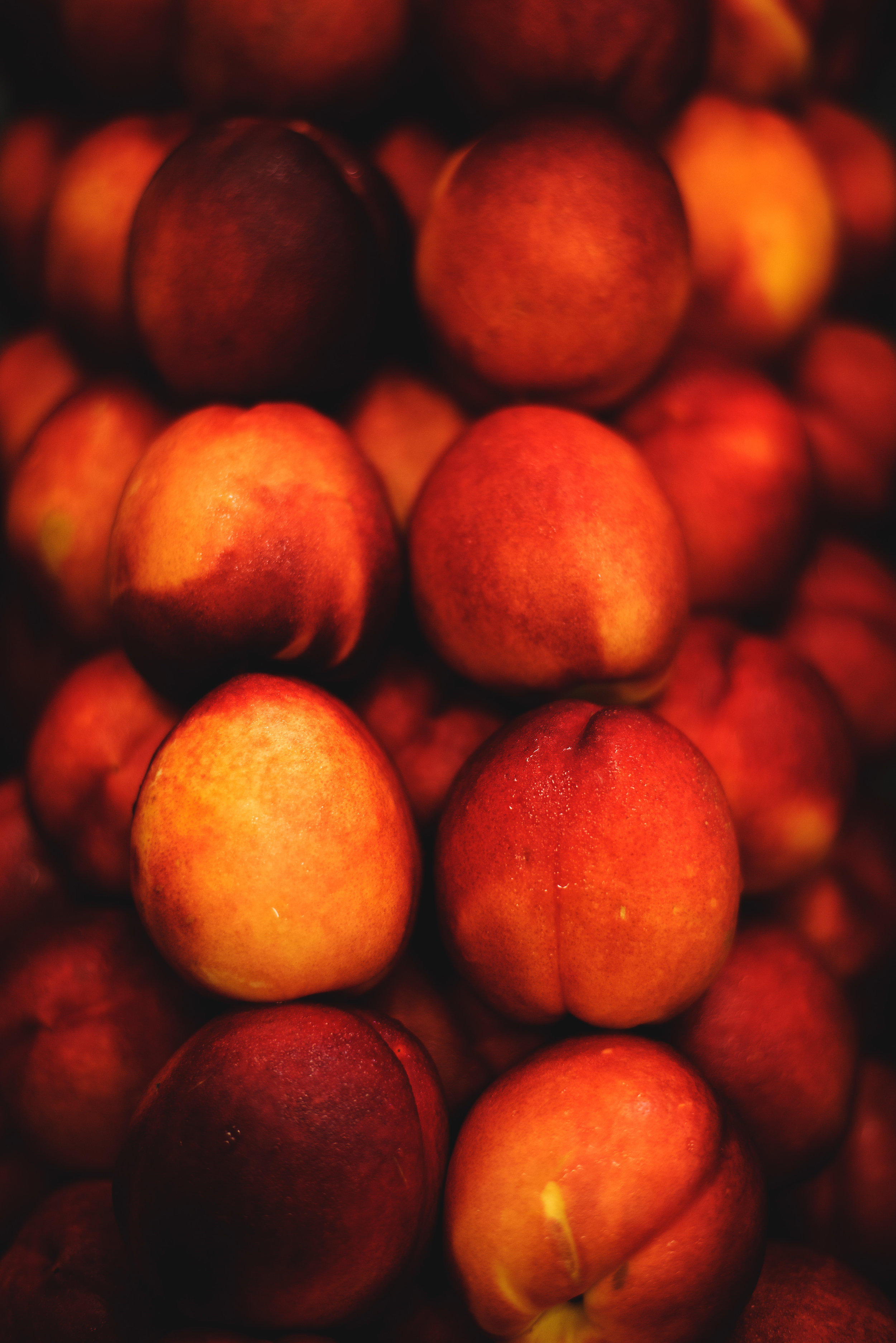 FoodFanaticsLive-Event-Food-Photography119.jpg