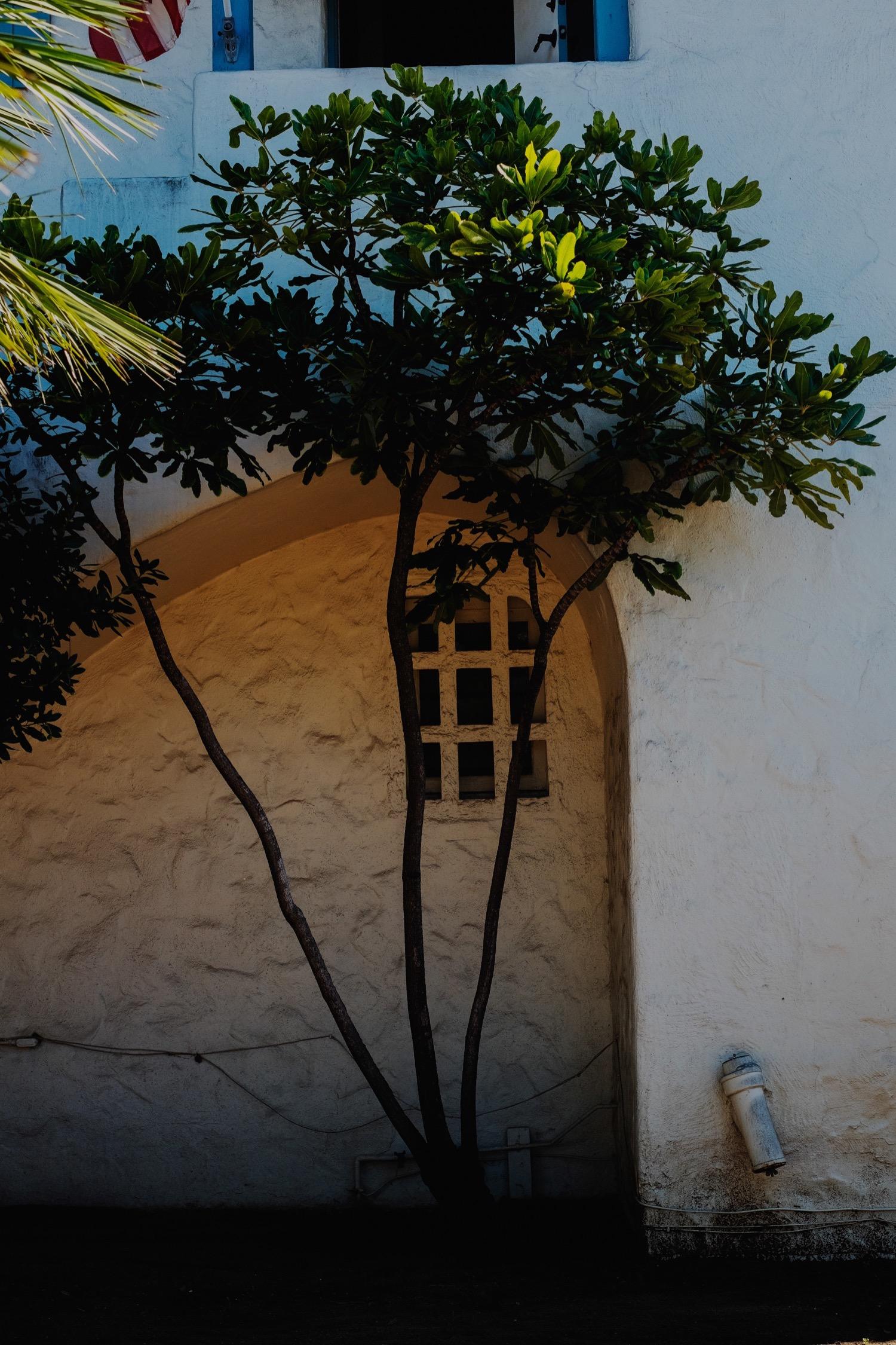 036_Honeymoon-SanDiego_0051.jpg