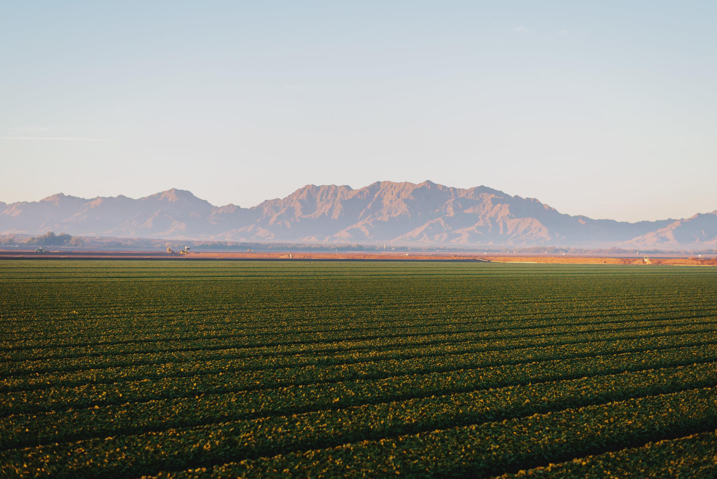 Arizona-Spinach_0006.jpg