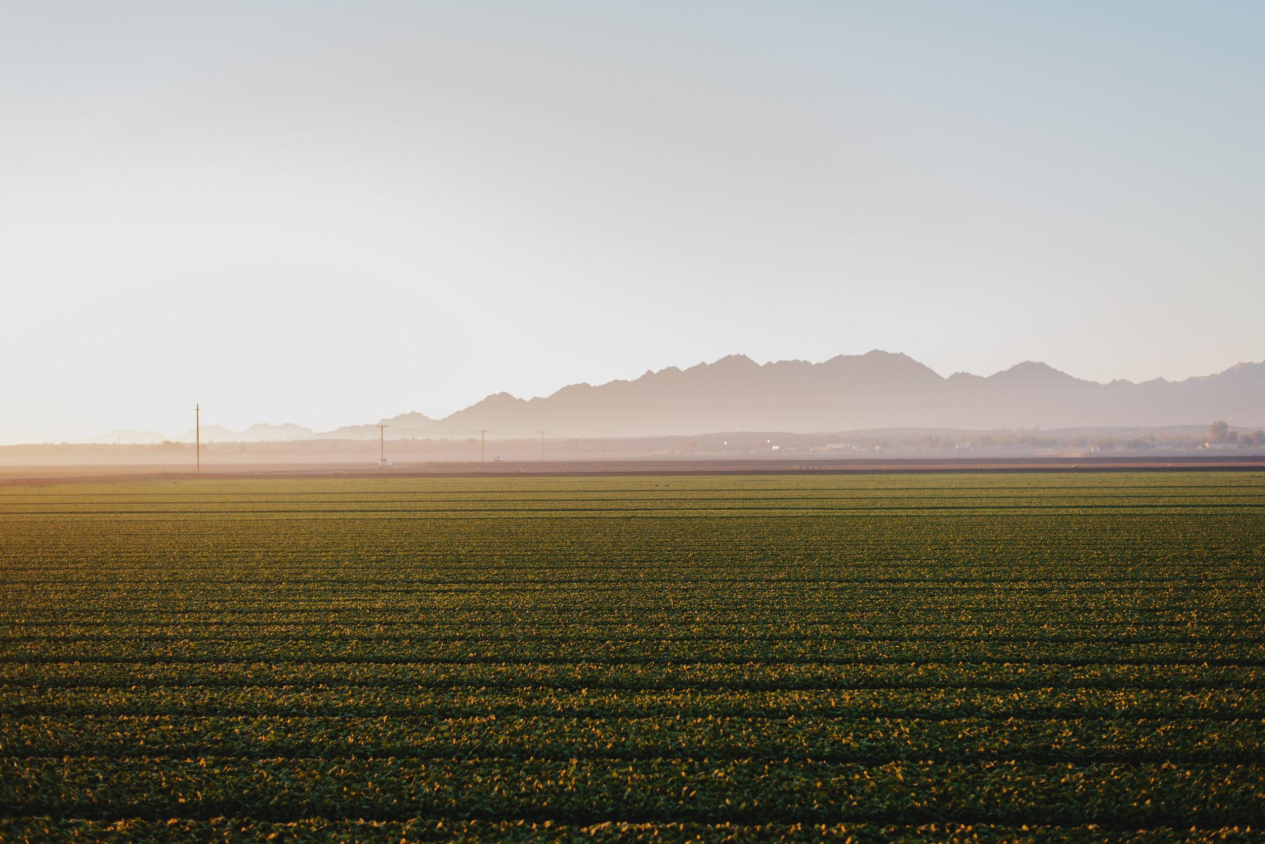 Arizona-Spinach_0005.jpg