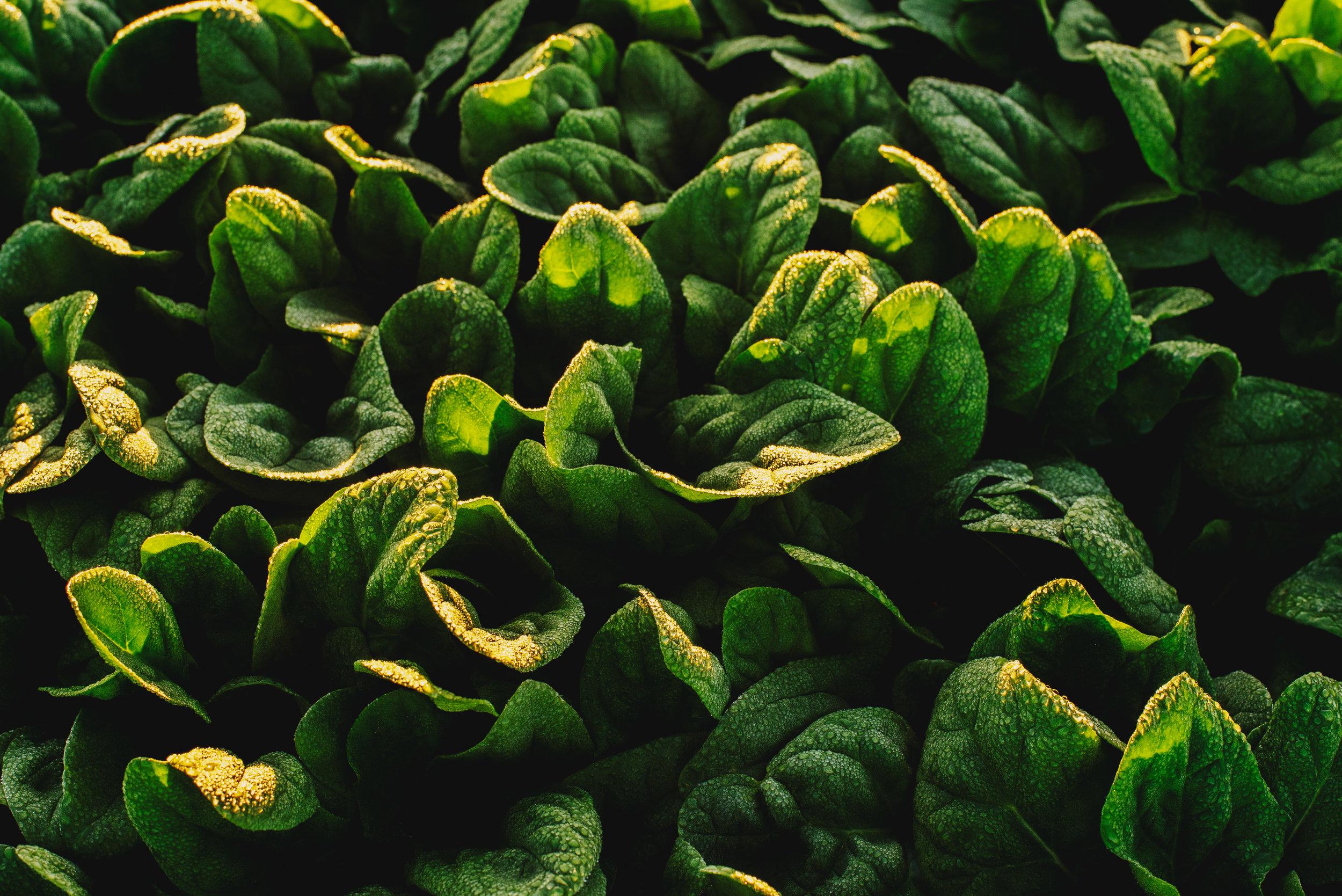 Arizona-Spinach_0038.jpg