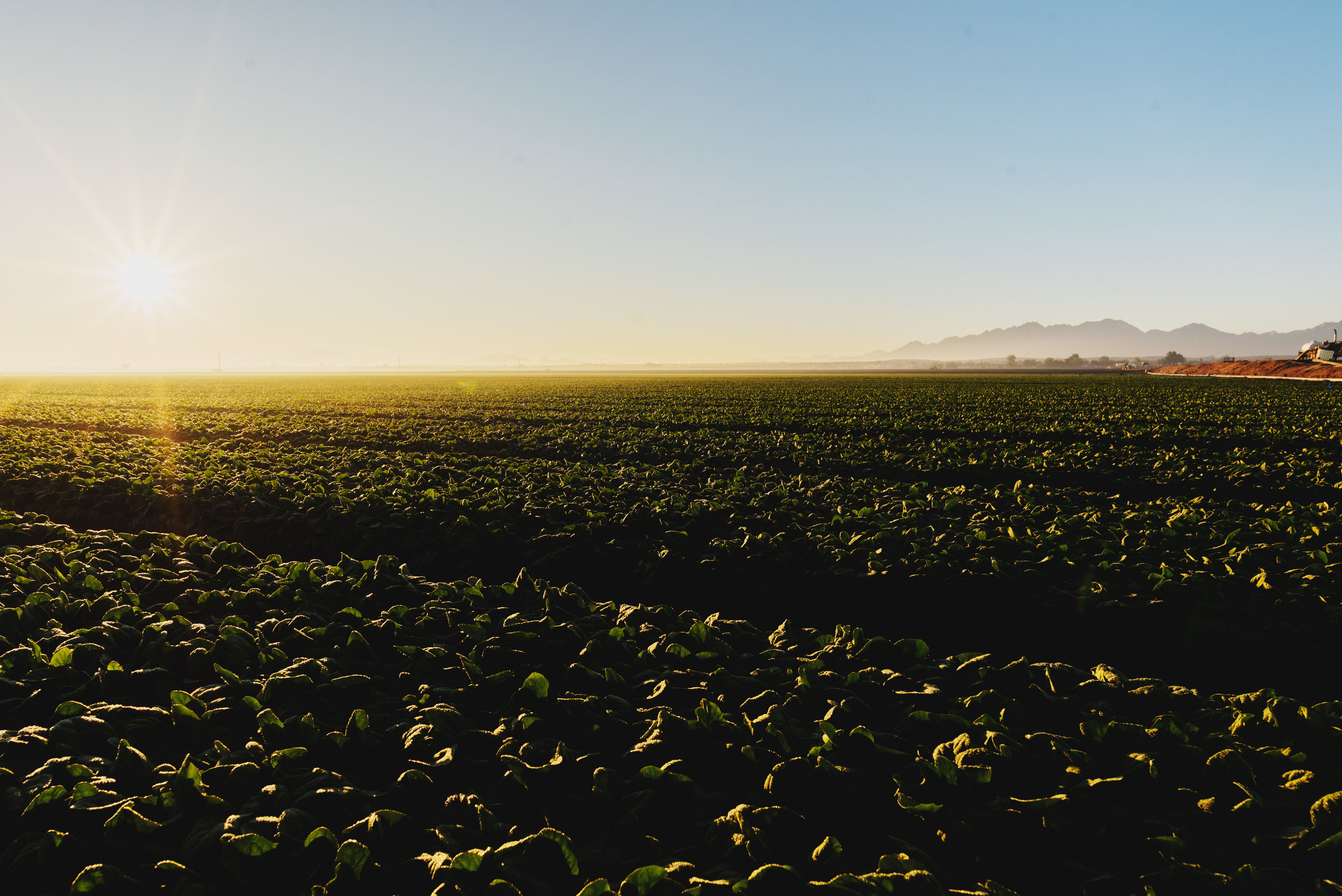 Arizona-Spinach_0061.jpg