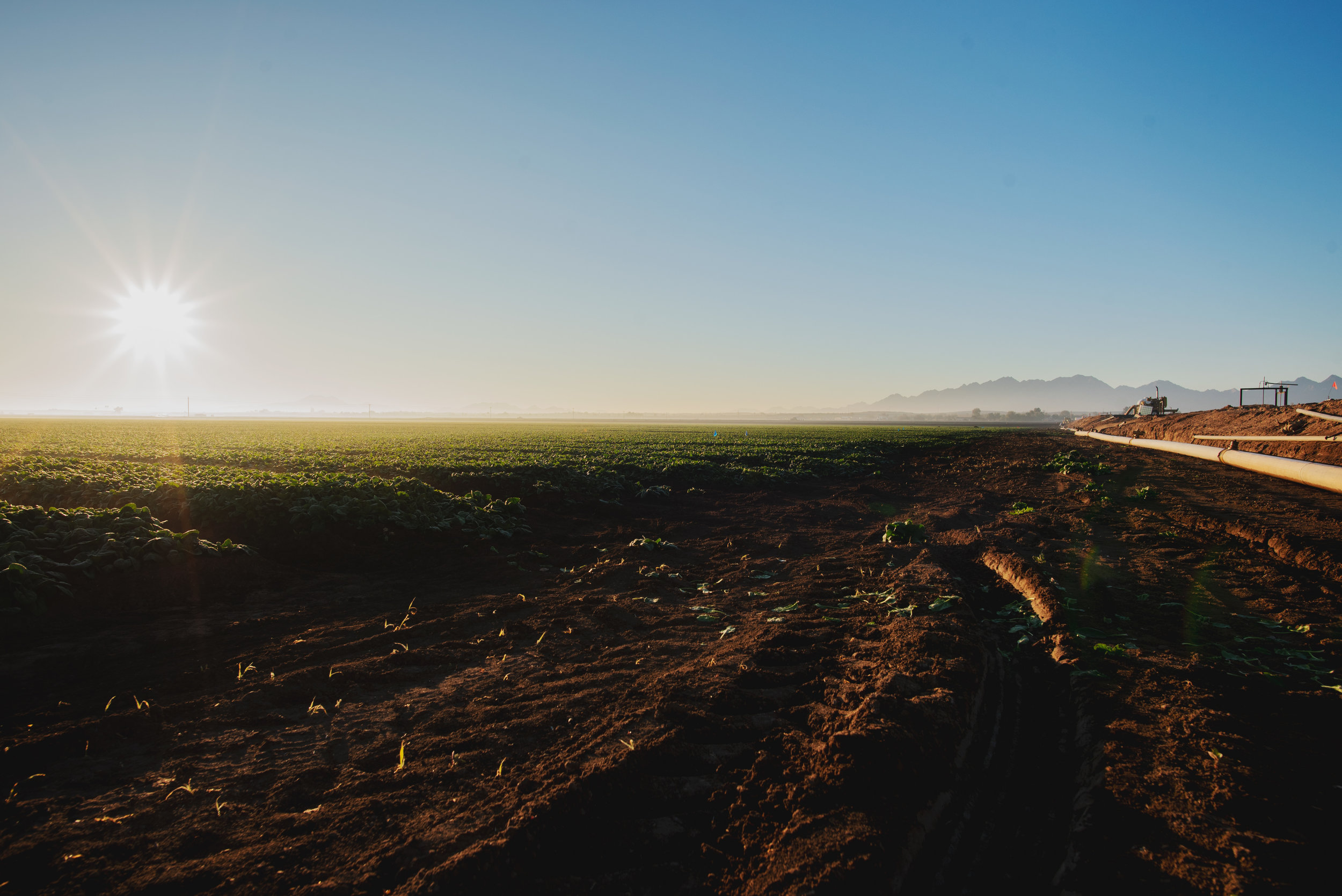 Arizona-Spinach_0080.jpg