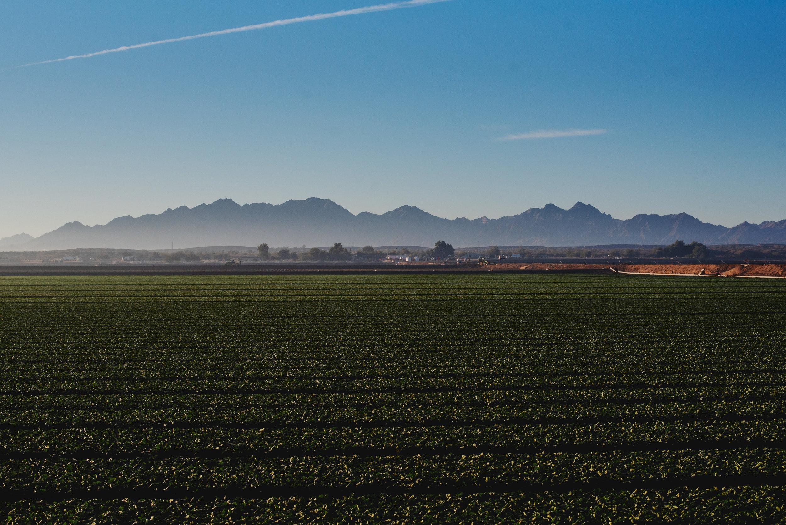 Arizona-Spinach_0120.jpg