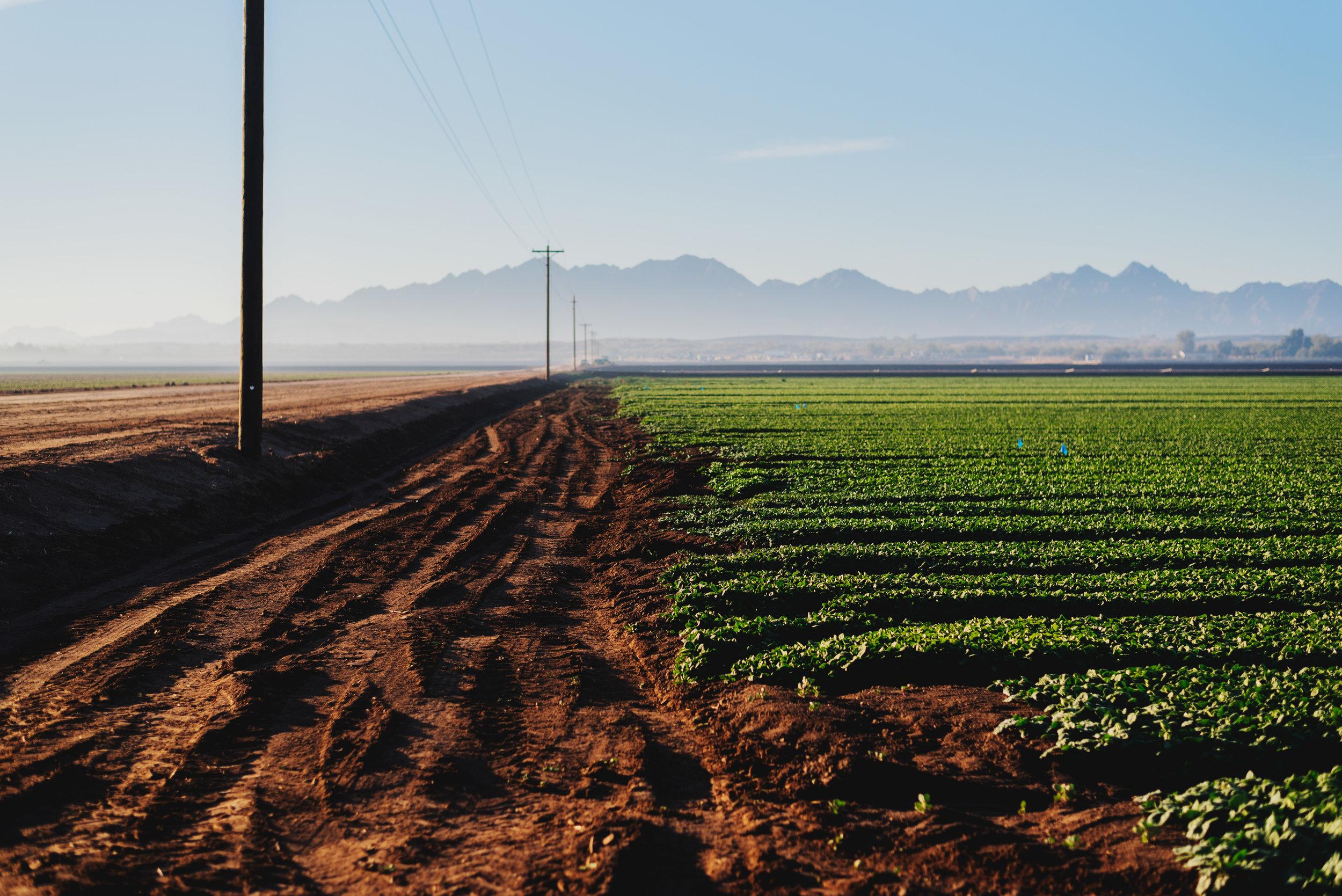Arizona-Spinach_0137.jpg