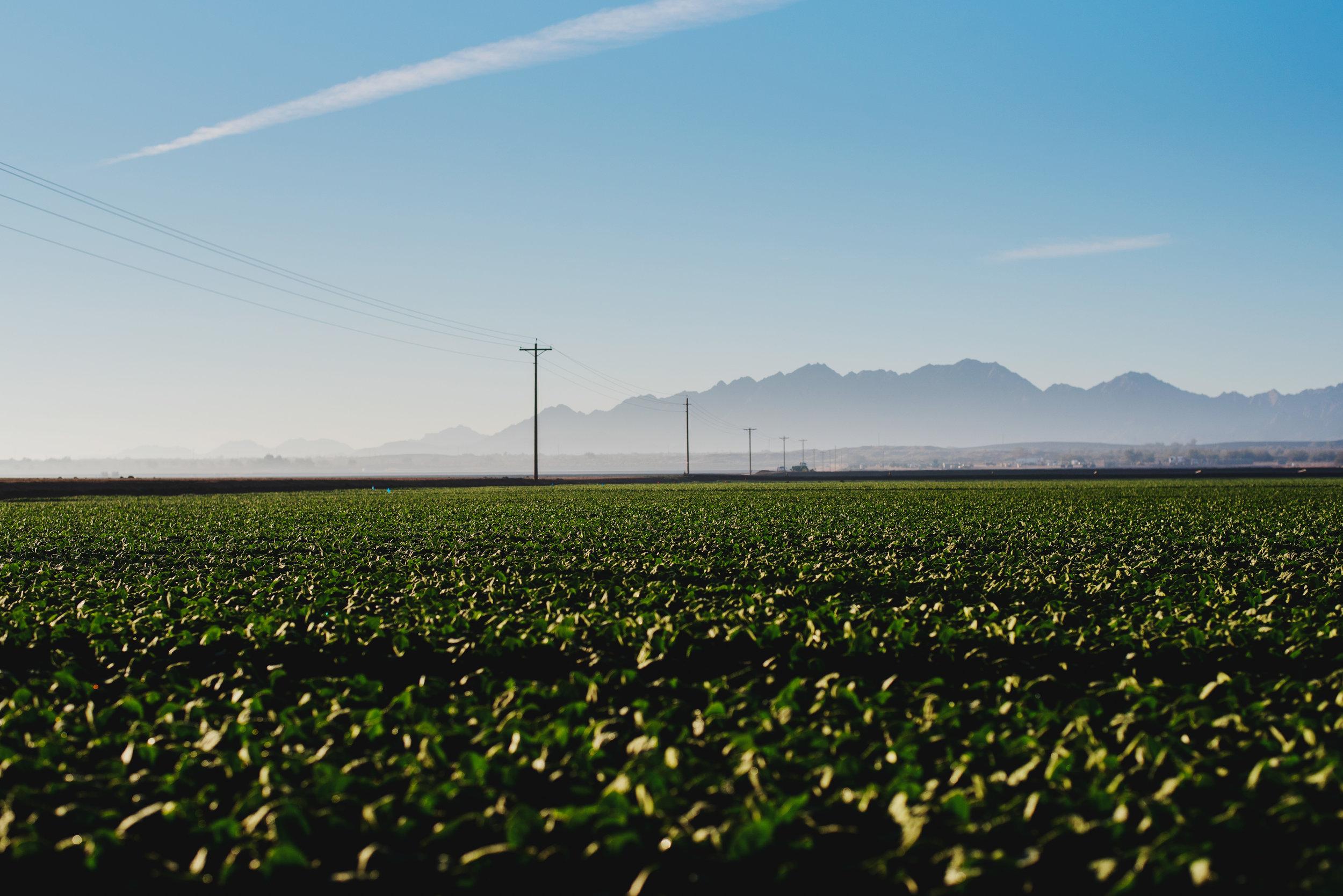 Arizona-Spinach_0140.jpg