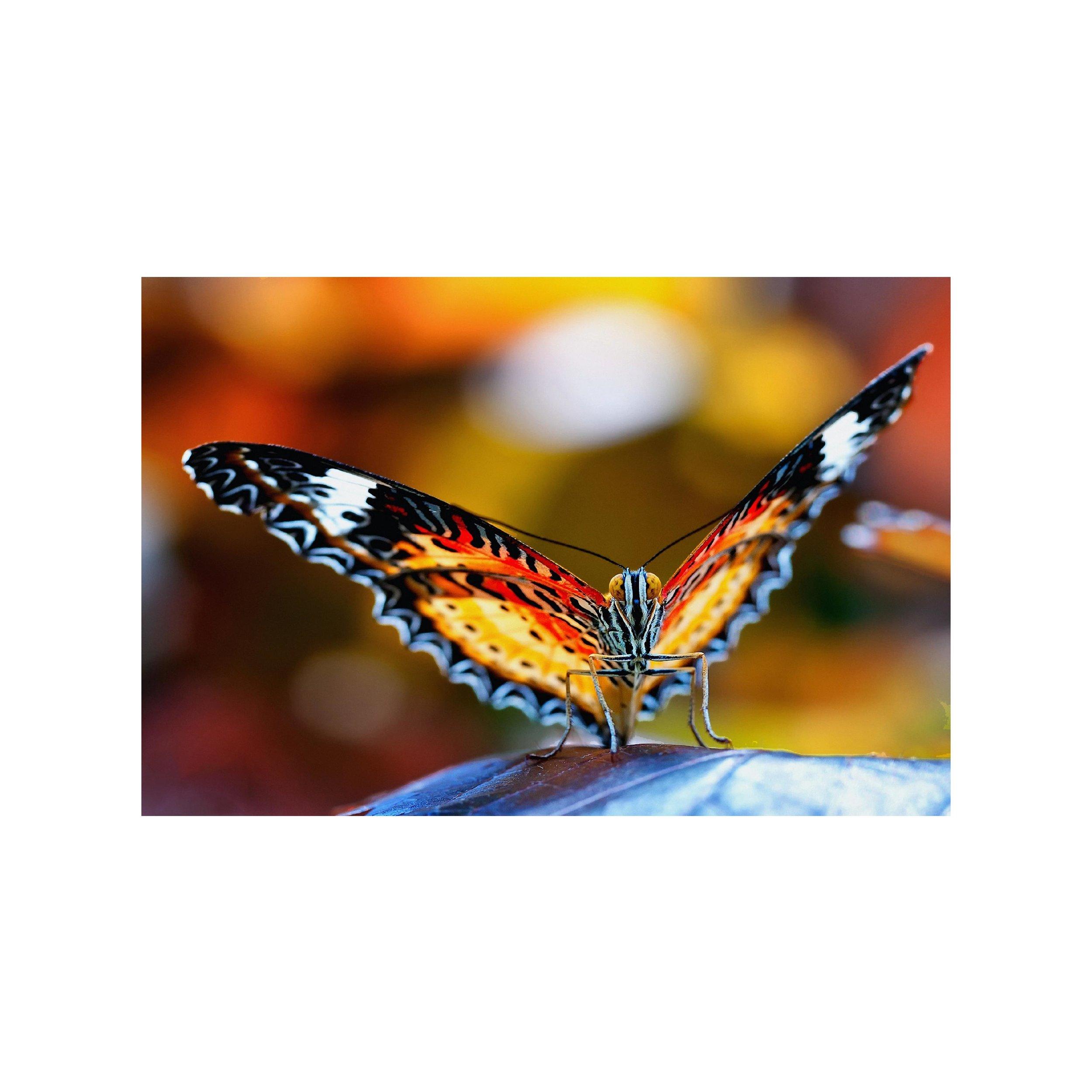 Butterfly_3.jpg