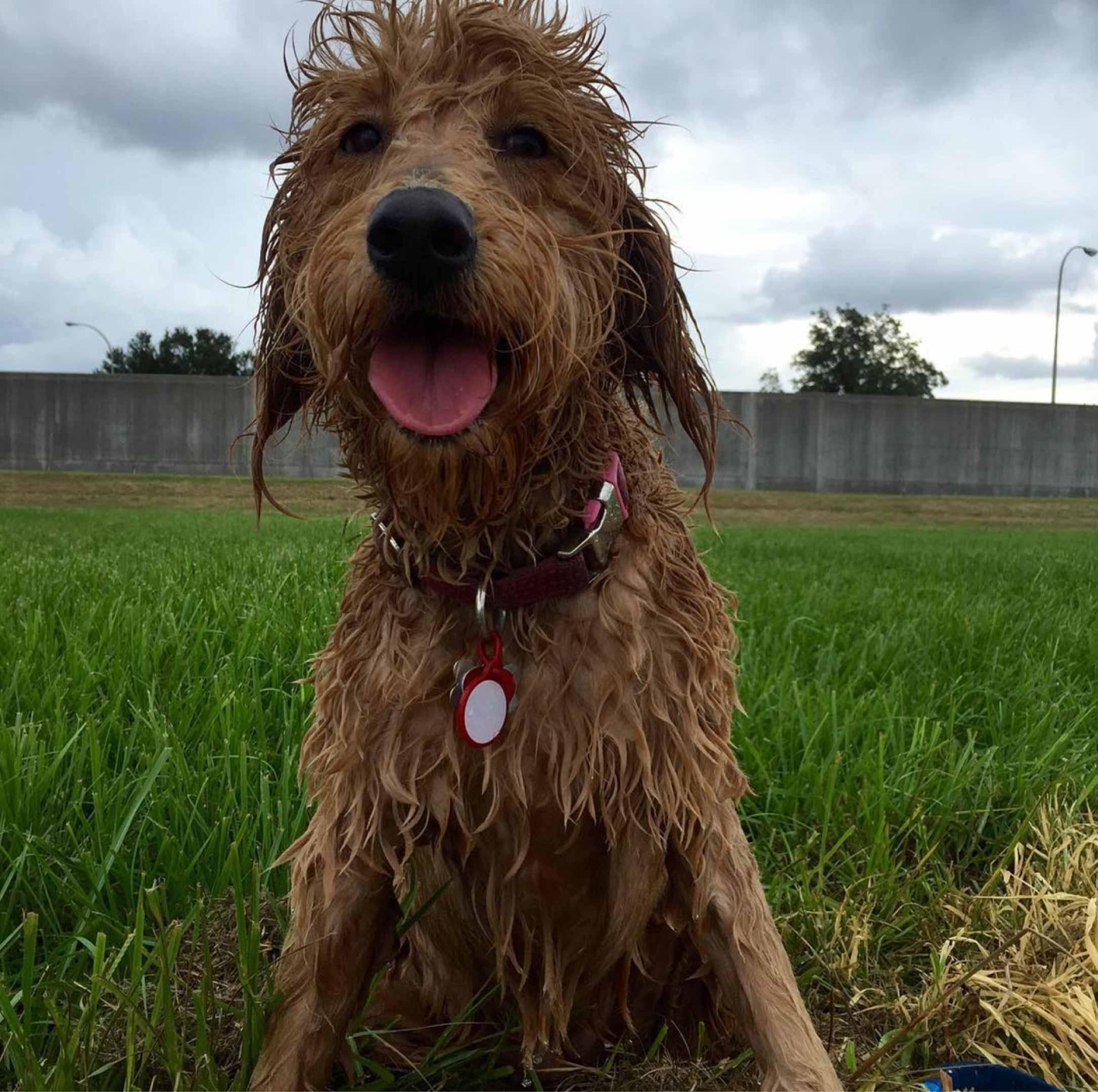 Winnie remembers her first swim!