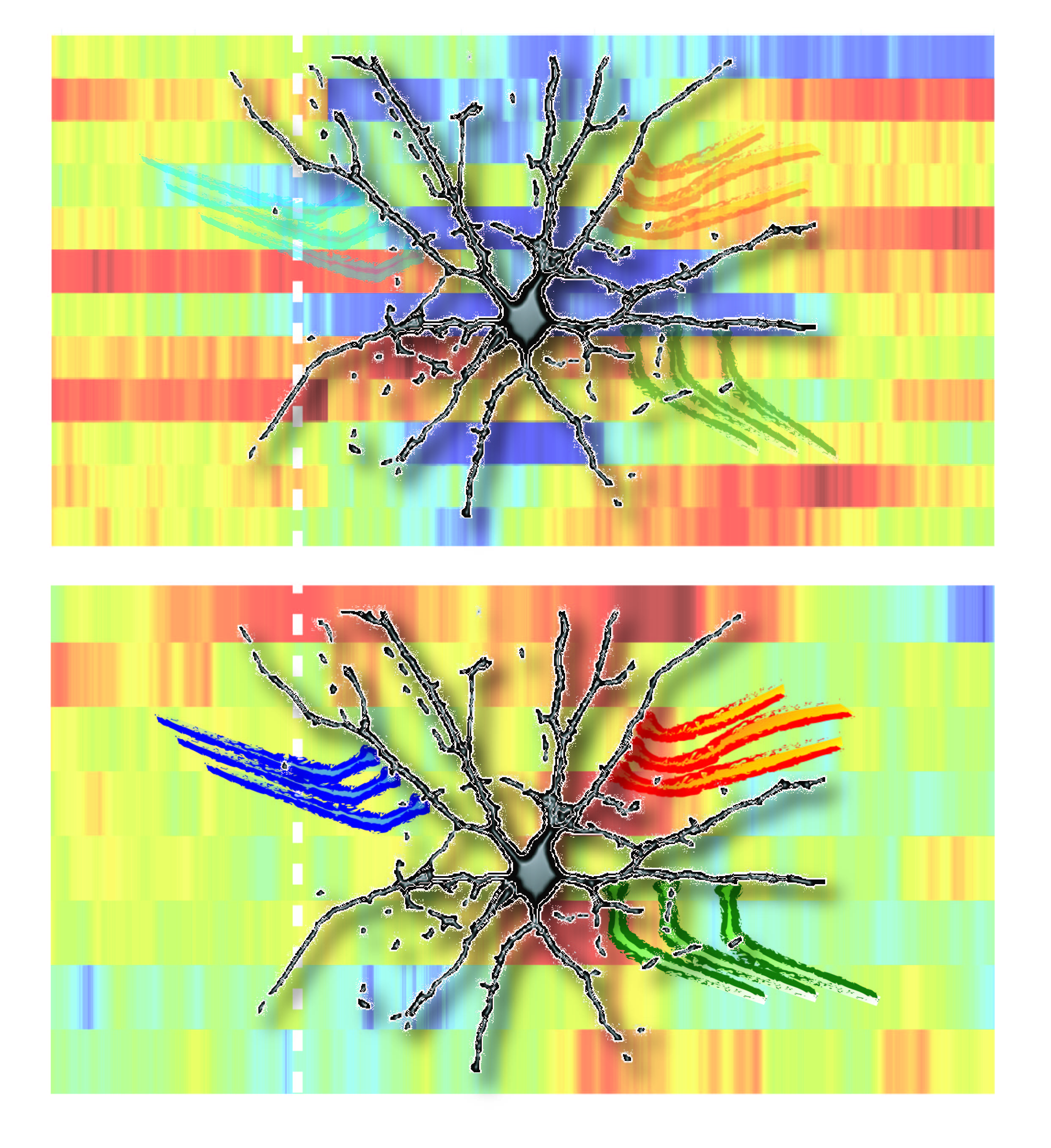Research Identifies Complex Of Neurons >> Research Projects Calipari Lab