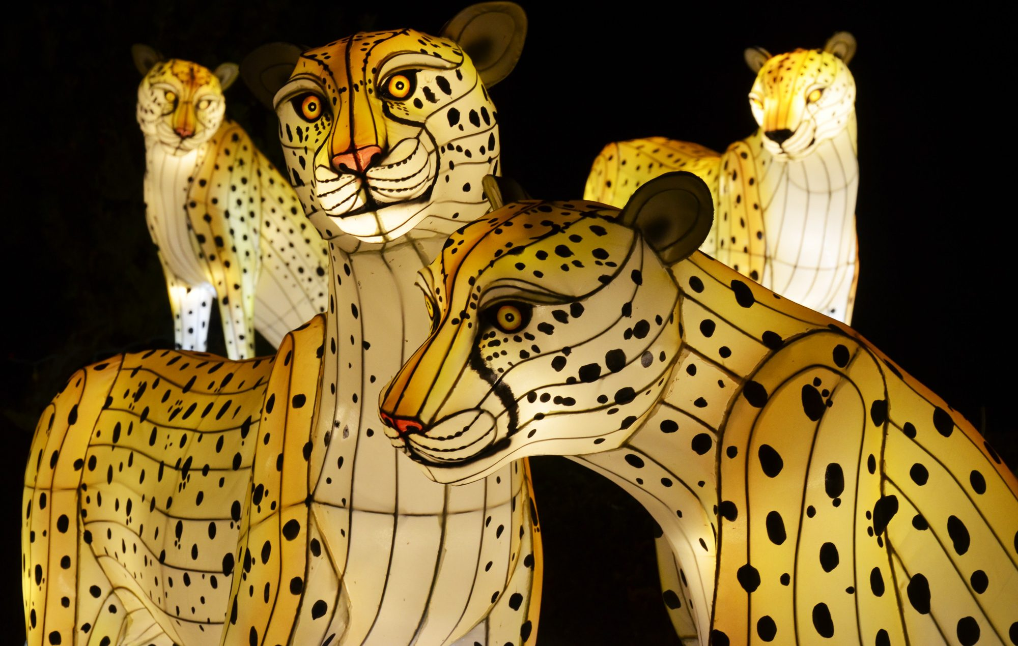 Life-size and larger-than-life Chinese lanterns in the shapes of animals, flora and fauna are on view through Oct. 29 at Daniel Stowe Botanical Garden in Belmont daily starting at 5:30 p.m.