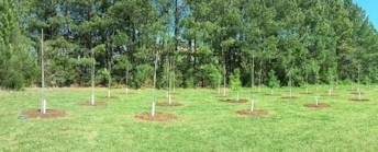 The nonprofit TreesCharlotte is giving away free trees on March 10 at its headquarters on Tuckaseegee Road.
