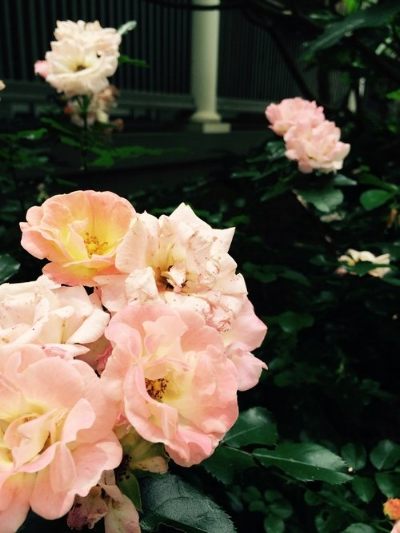 The Wing Haven Gardeners' Garden Tour is May 5-6.