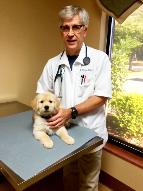For advice on the safest way to give cool treats to your hot dog, we turned to animal expert Dr. Wayne Mercer, a Doctor of Veterinary Medicine at SouthPark Animal Hospital.
