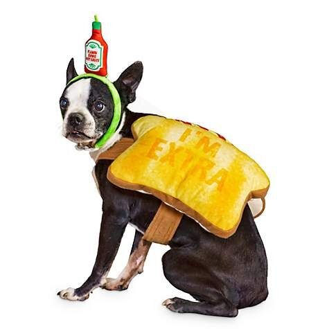 Toast of the Town Dog Costume, $10.99 (was $21.99).