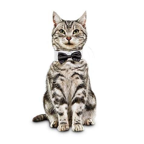 Classy Feline Bowtie Cat Collar, $3.49 (was $6.99).