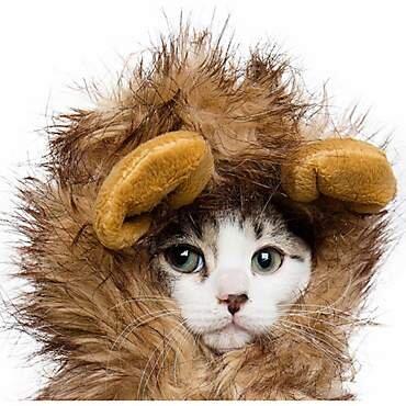 Lion Mane Cat Costume, $7.41 (was $14.99).