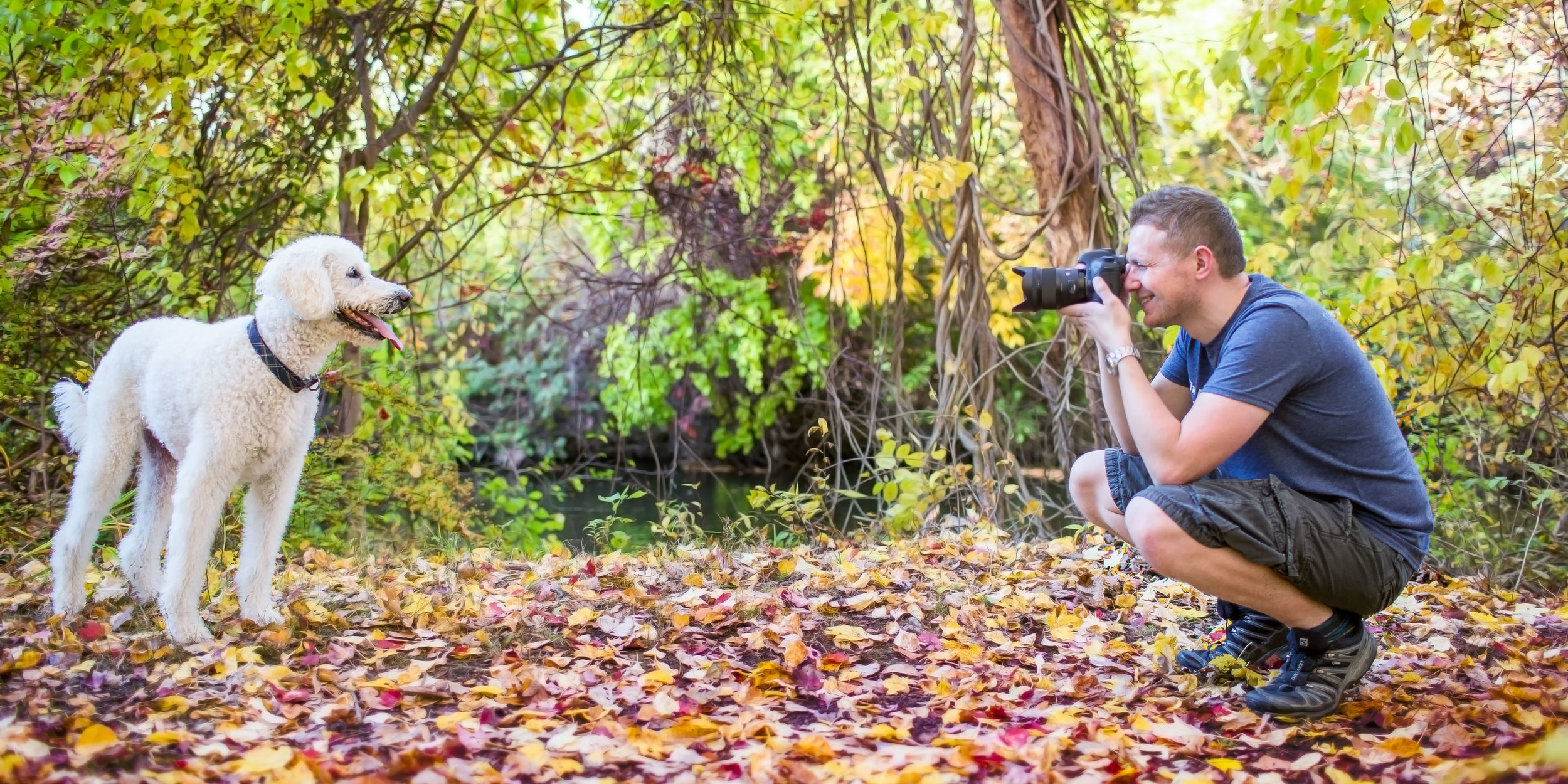 Photograph of a poodle being photographed by professional dog photographer in autumn leaves