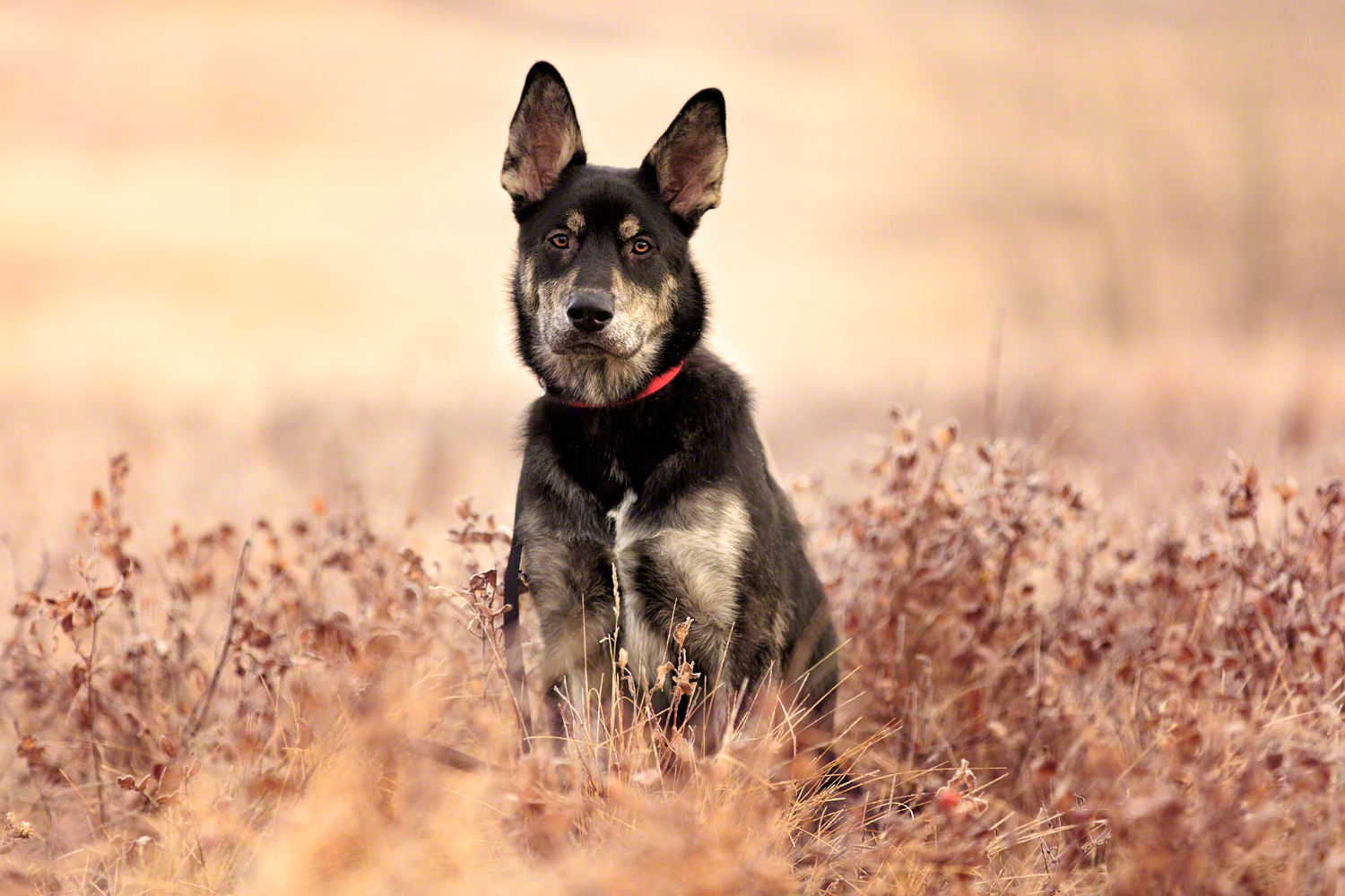 the_dog_with_a_bow_photography_calgary_pet_dogs-2.jpg