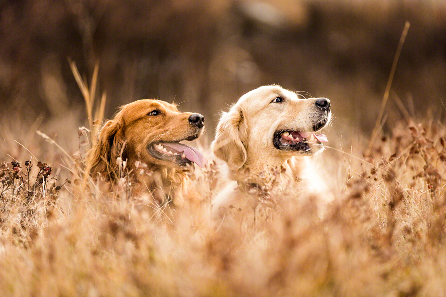 the_dog_with_a_bow_photography_calgary_pet_dogs-4.jpg