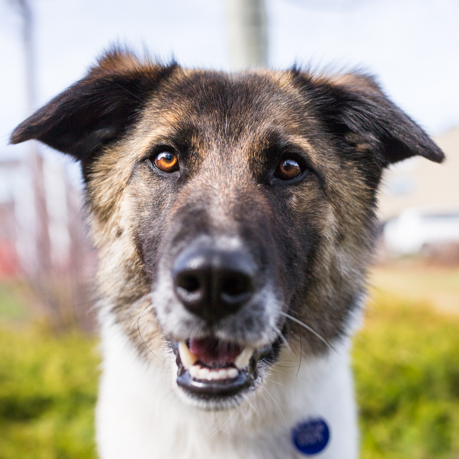 The_Dog_with_a_bow_photography_Calgary_Cochrane_Humane-6.jpg