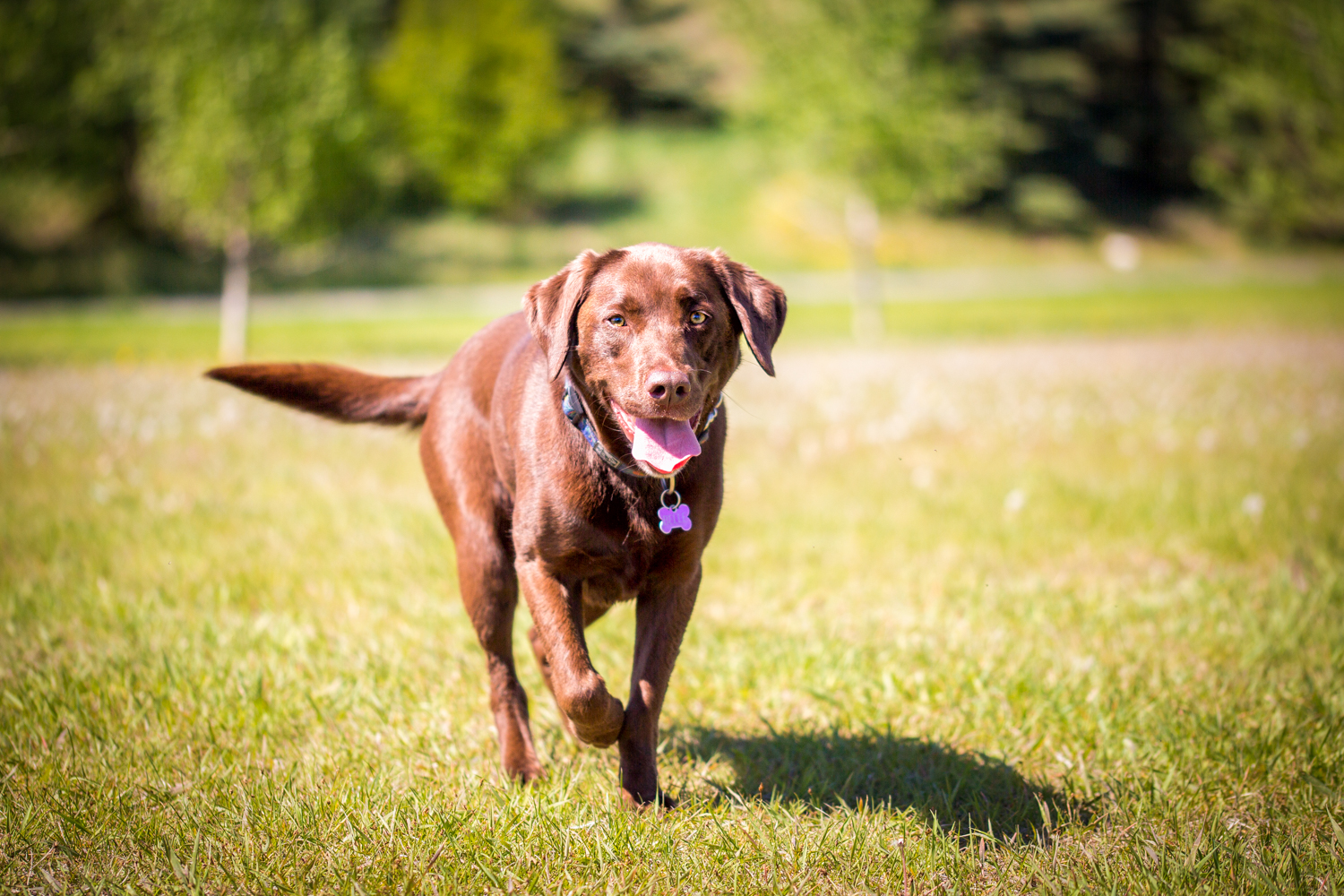 The_Dog_with_a_Bow_Photography_Cochrane_Humane_Mutt_Strut-8.jpg