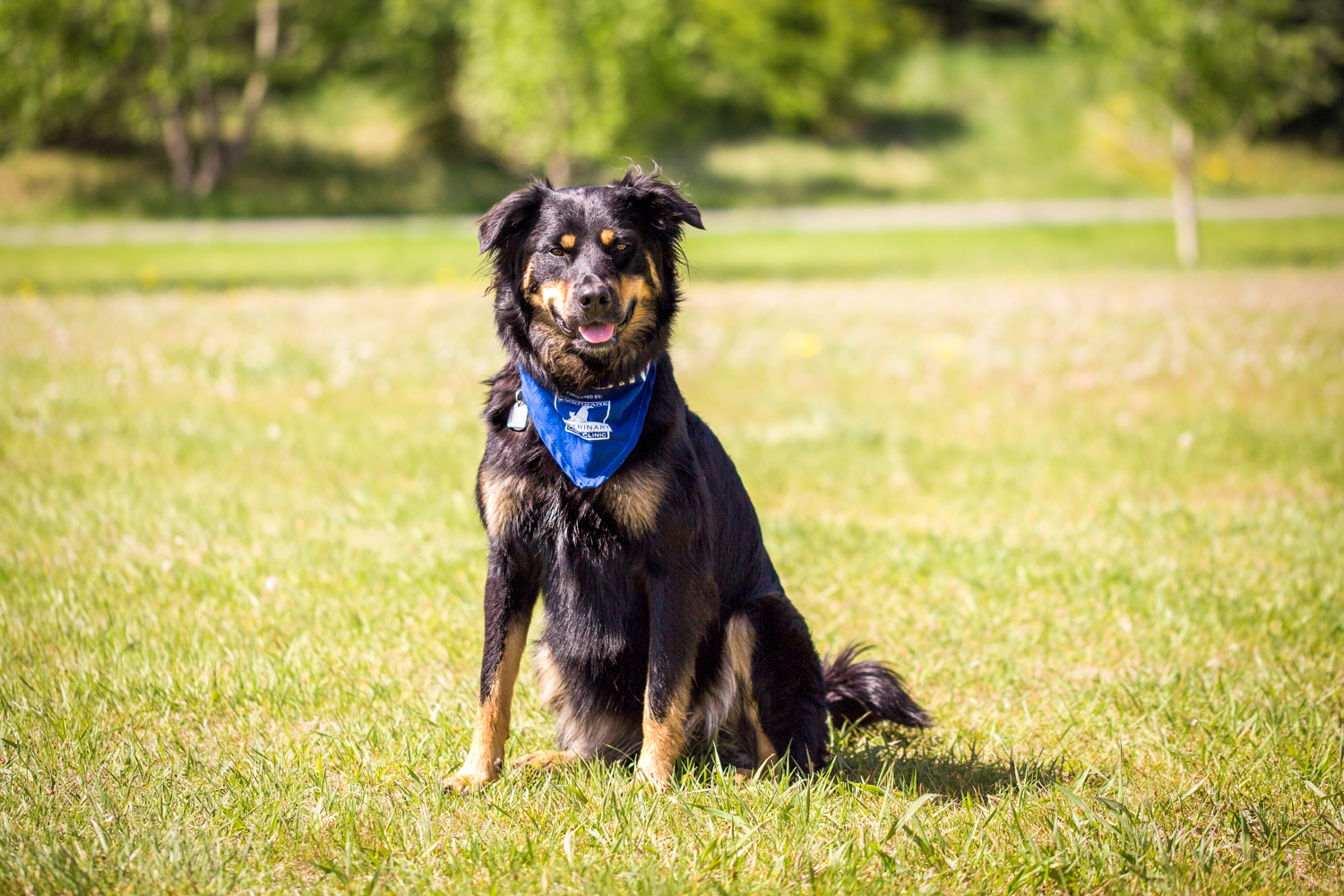 The_Dog_with_a_Bow_Photography_Cochrane_Humane_Mutt_Strut-4.jpg