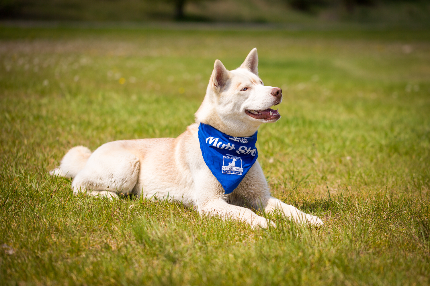The_Dog_with_a_Bow_Photography_Cochrane_Humane_Mutt_Strut-3.jpg
