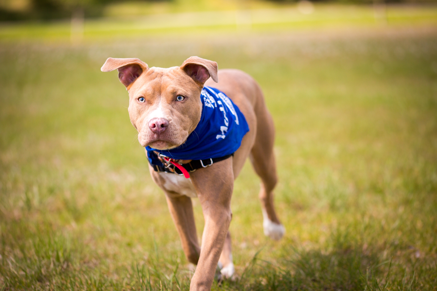 The_Dog_with_a_Bow_Photography_Cochrane_Humane_Mutt_Strut-2.jpg
