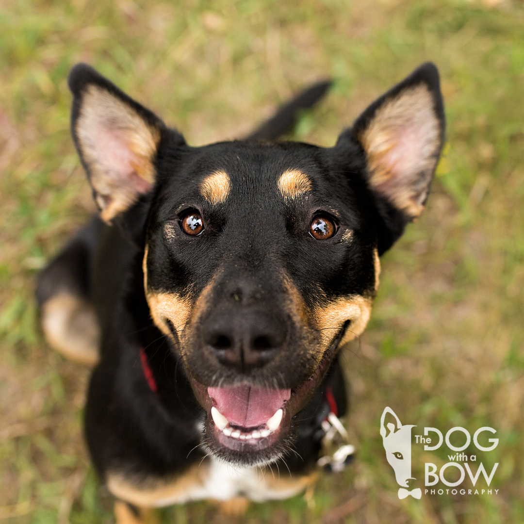 Photograph of smiling face of dog looking up at camera
