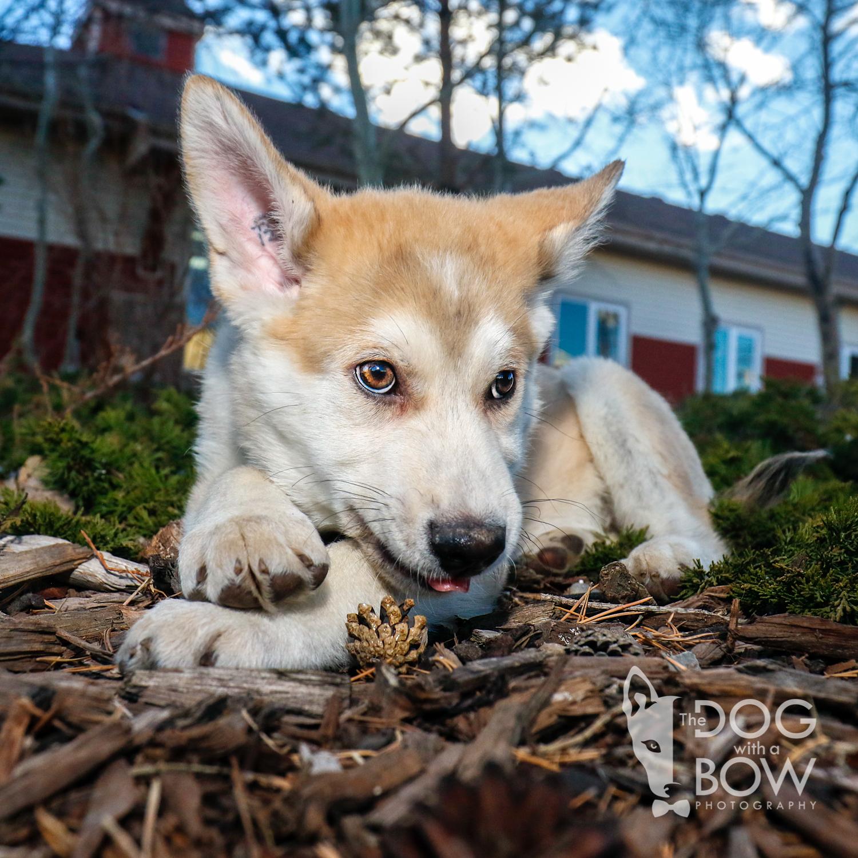 The-dog-with-a-bow-photography-calgary-cochrane-46.jpg