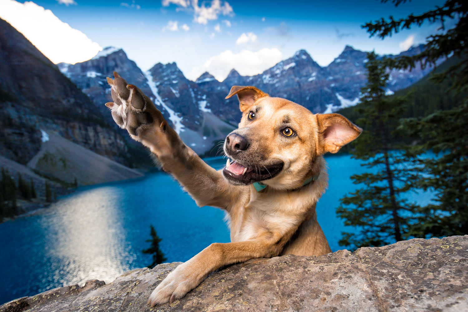 Photo of a dog in front of Lake Moraine in Alberta Canada.jpg
