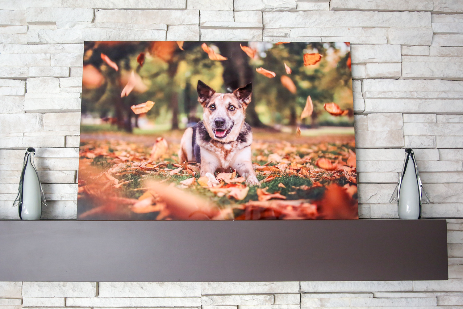 Modern Metal Print of a Dog in fall leaves.jpg