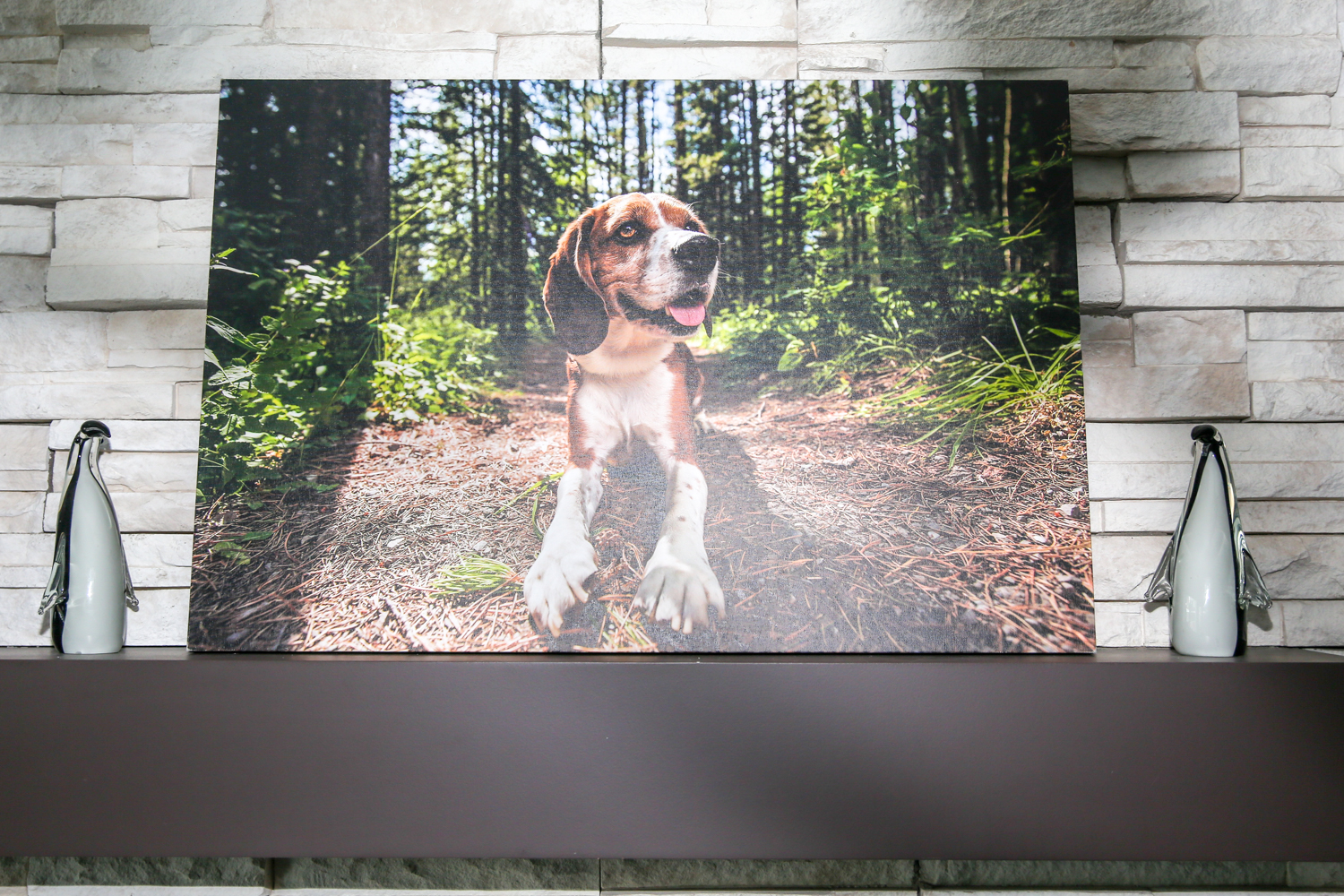 Premium Canvas Wrap of beagle dog in grass.jpg