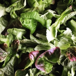 SALAD MIX - Schuyler Greens is known for salad mix. In fact, it is our most popular product. Available in retail and wholesale packaging.