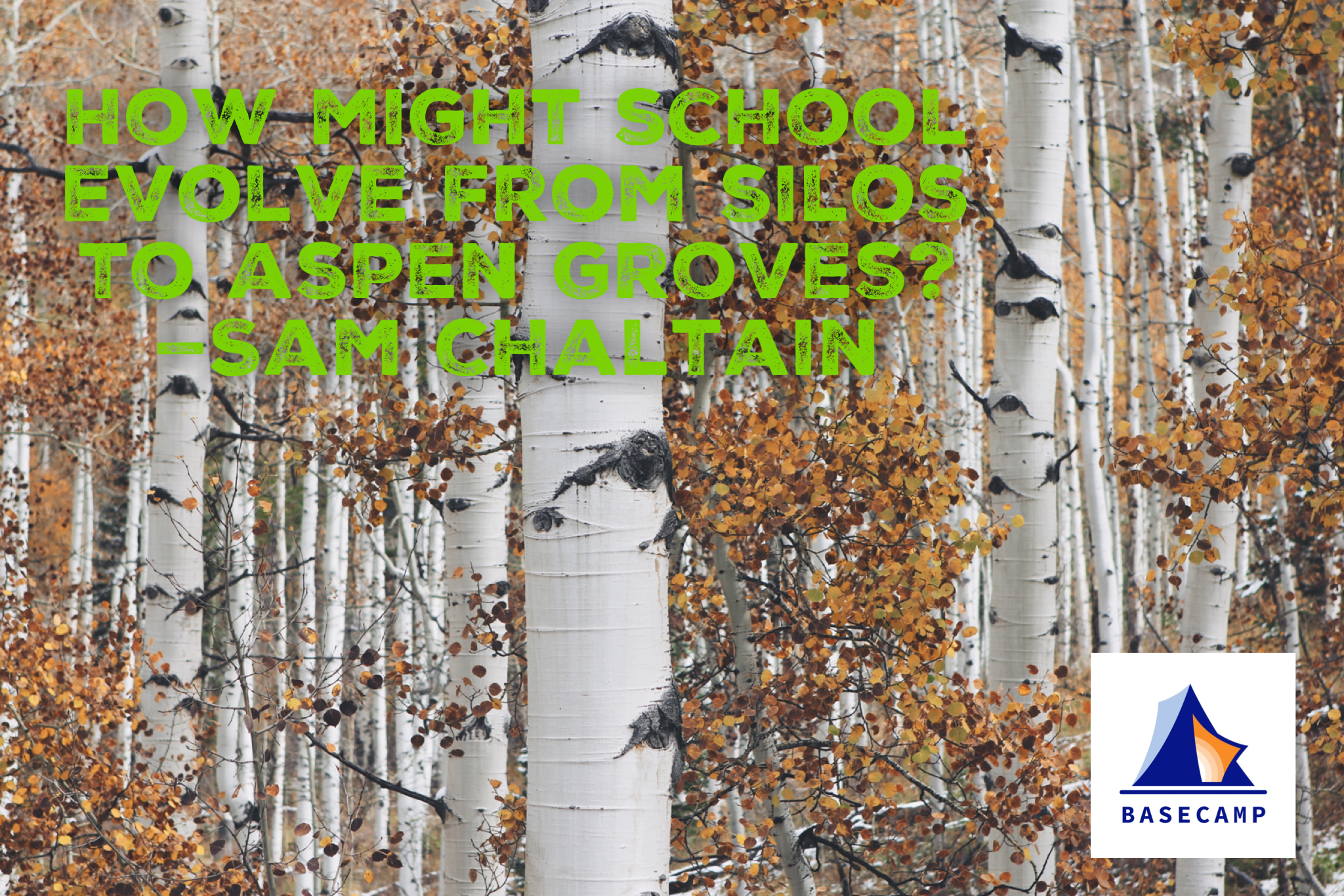 Aspen Groves from Silos.png