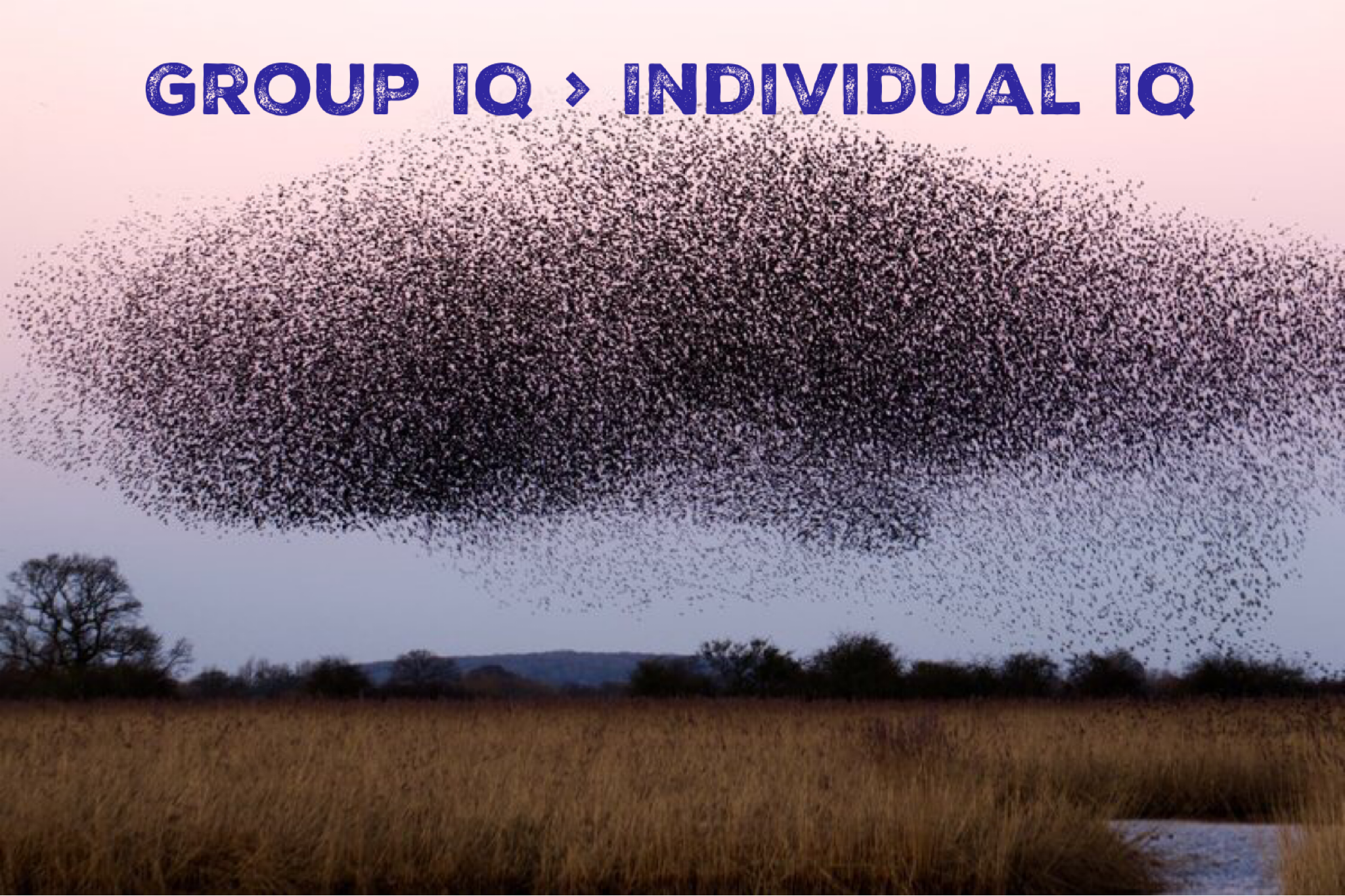 Group IQ > Individual IQ