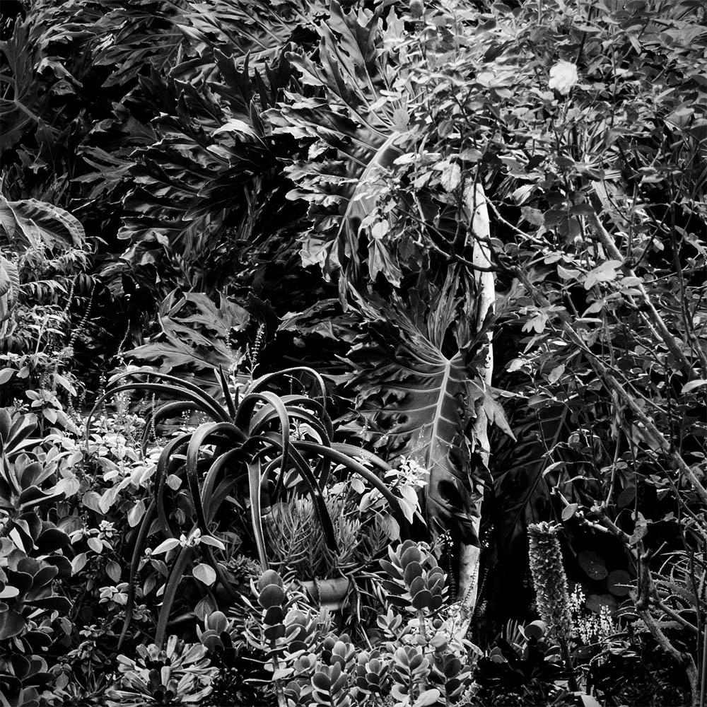 Rick Amor's Garden