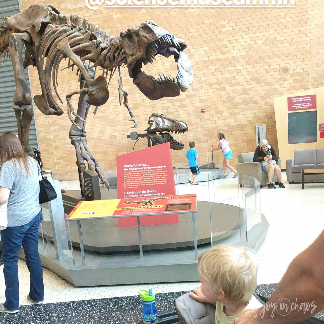 minnesota science museum trex dinosaur