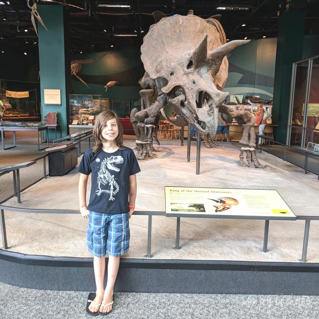 minnesota science museum triceratop