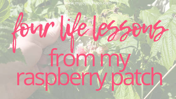God used my little raspberry plants to remind me of some very vital life lessons. Lessons I can apply to parenting. Lessons I can apply to blogging. Lessons I can apply to just about every single aspect of my life and I hope you feel the same.