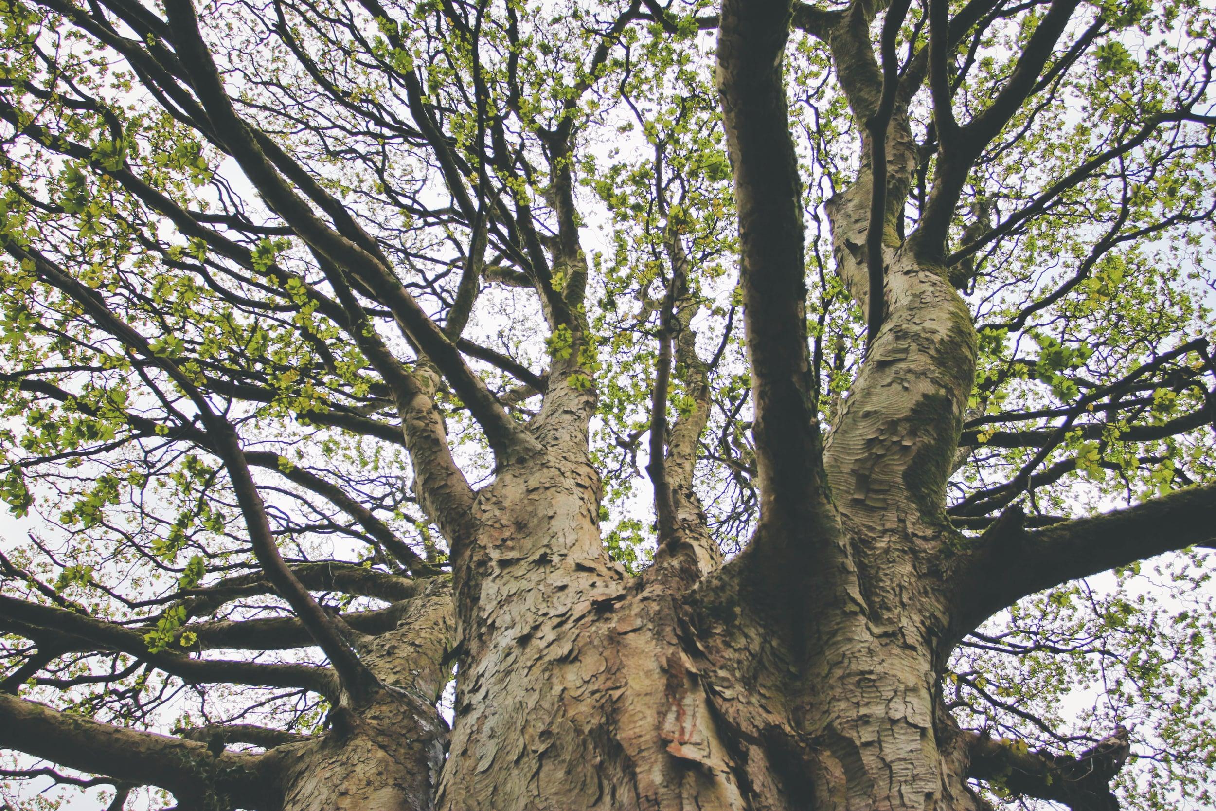 tree-02951.jpg