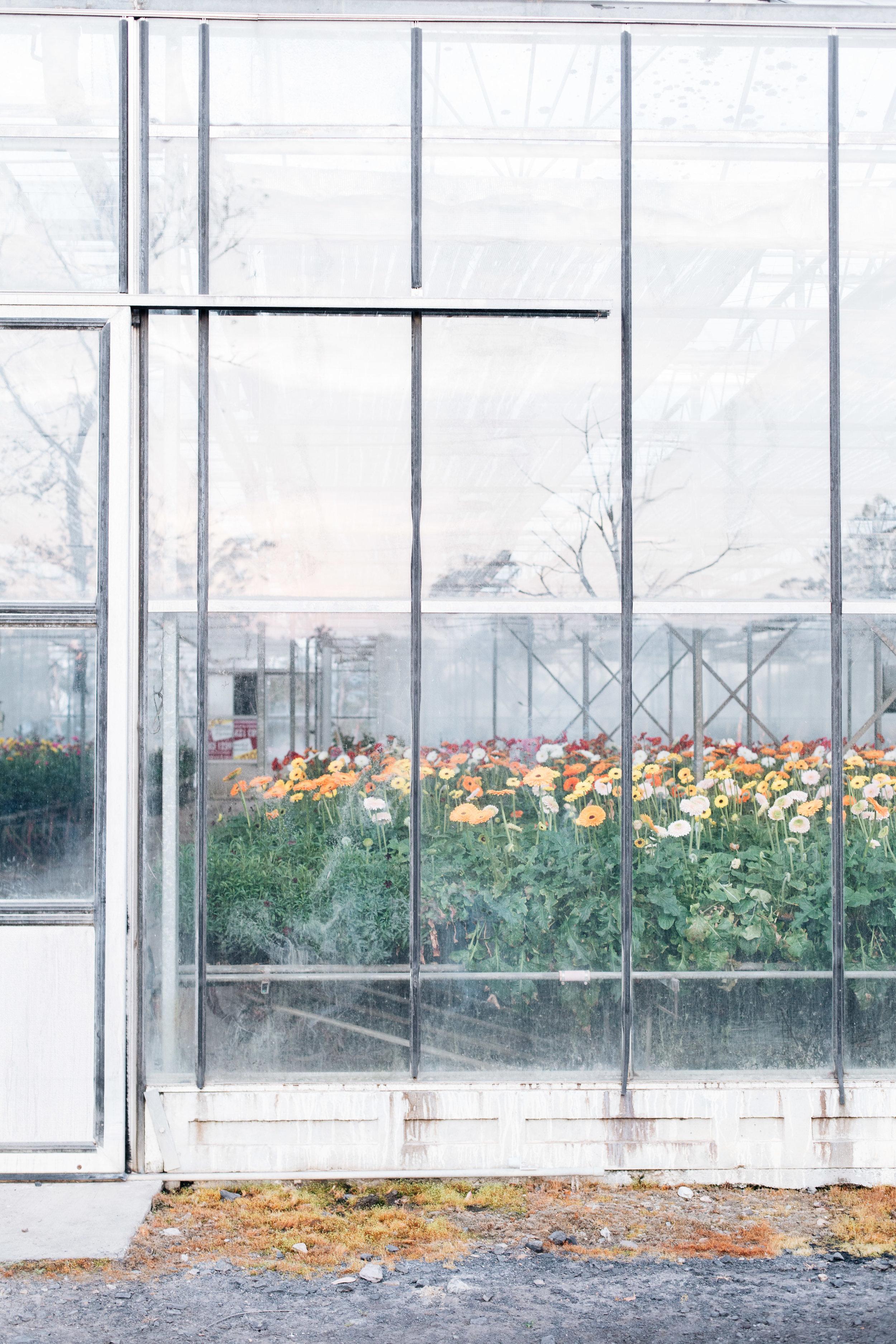 Jonima Flower Farm