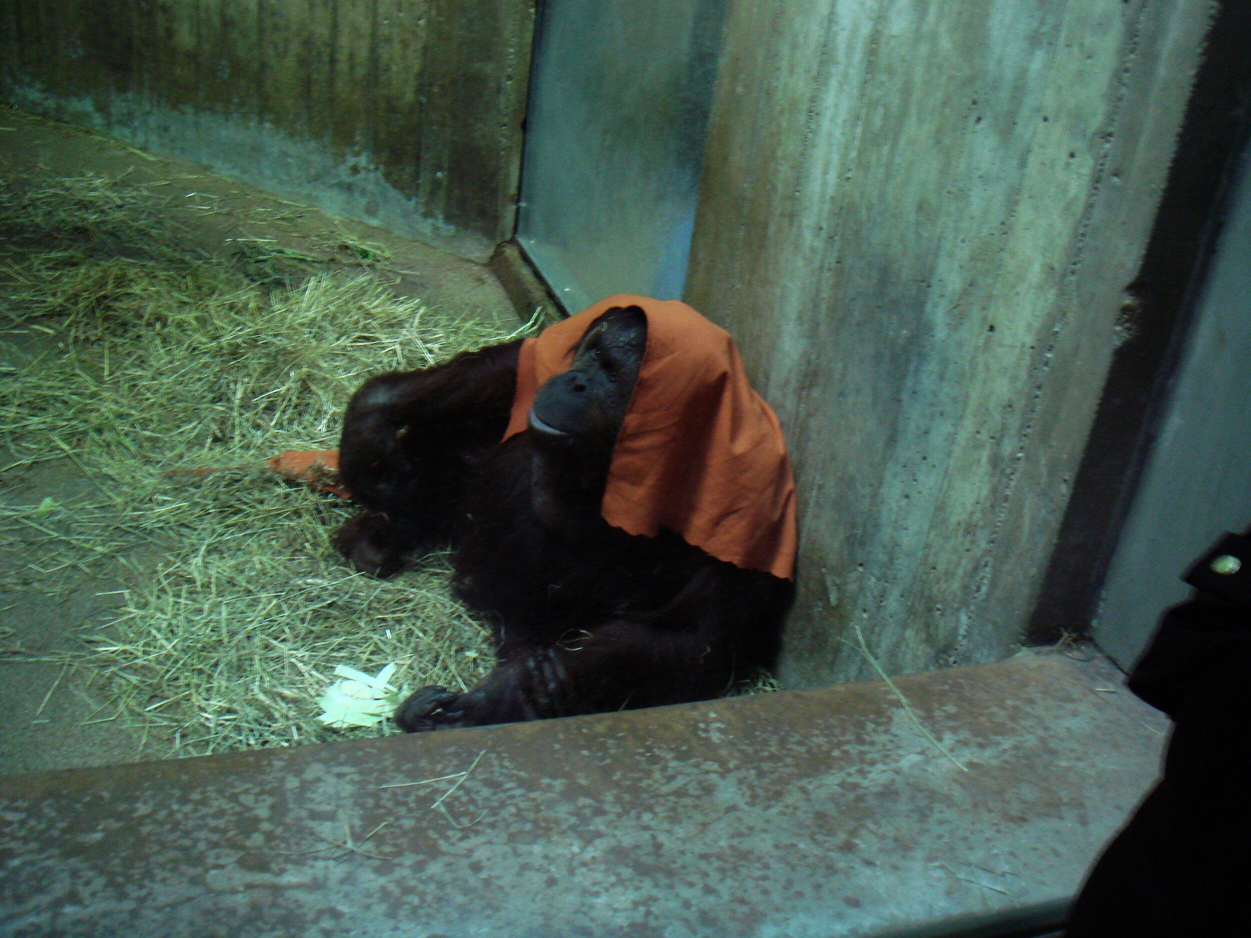 National Zoo Upgrades
