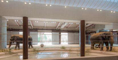 Elephant Center Restoration
