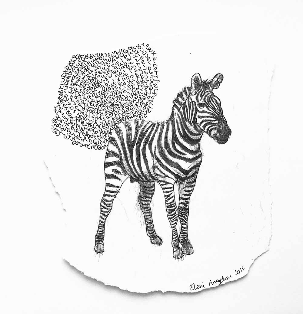 Young Zebra with handwritten text