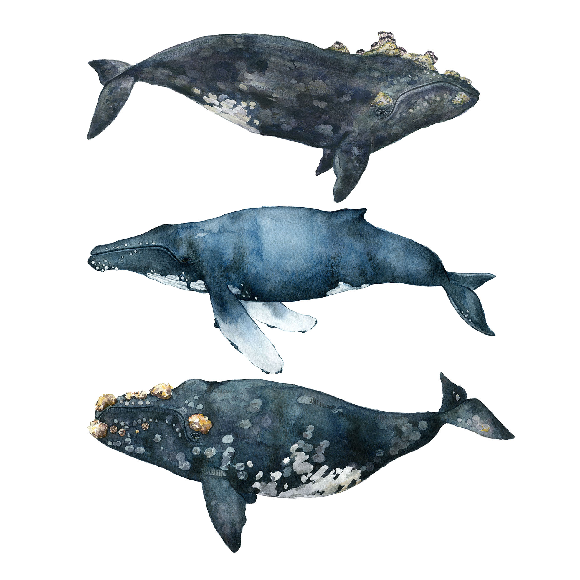 The Three Whales