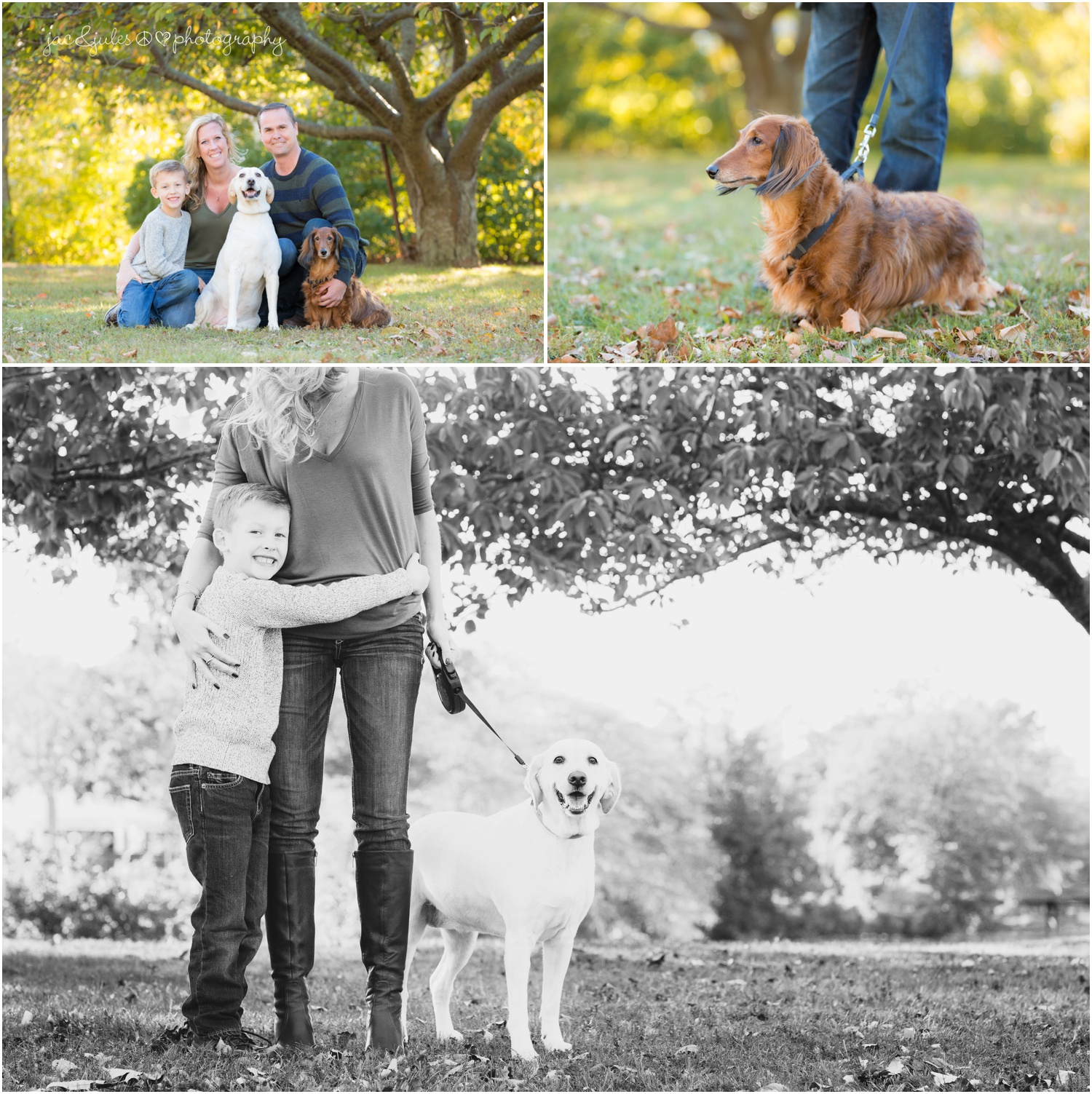 family of 3 with 2 dogs