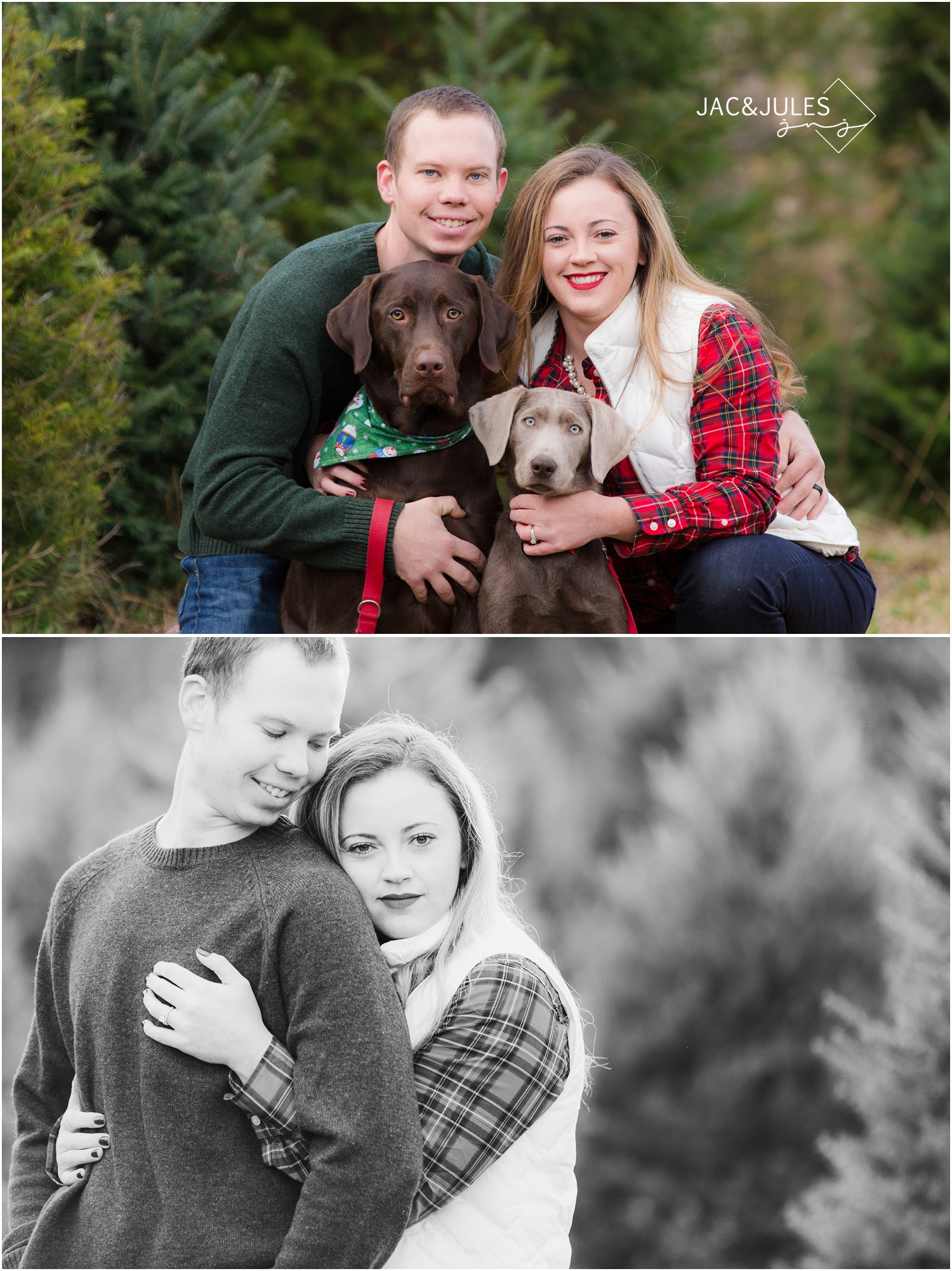 jacnjules photographs couple and their dogs for their christmas photos at Lone Silo Tree Farm in New Egypt NJ using natural light