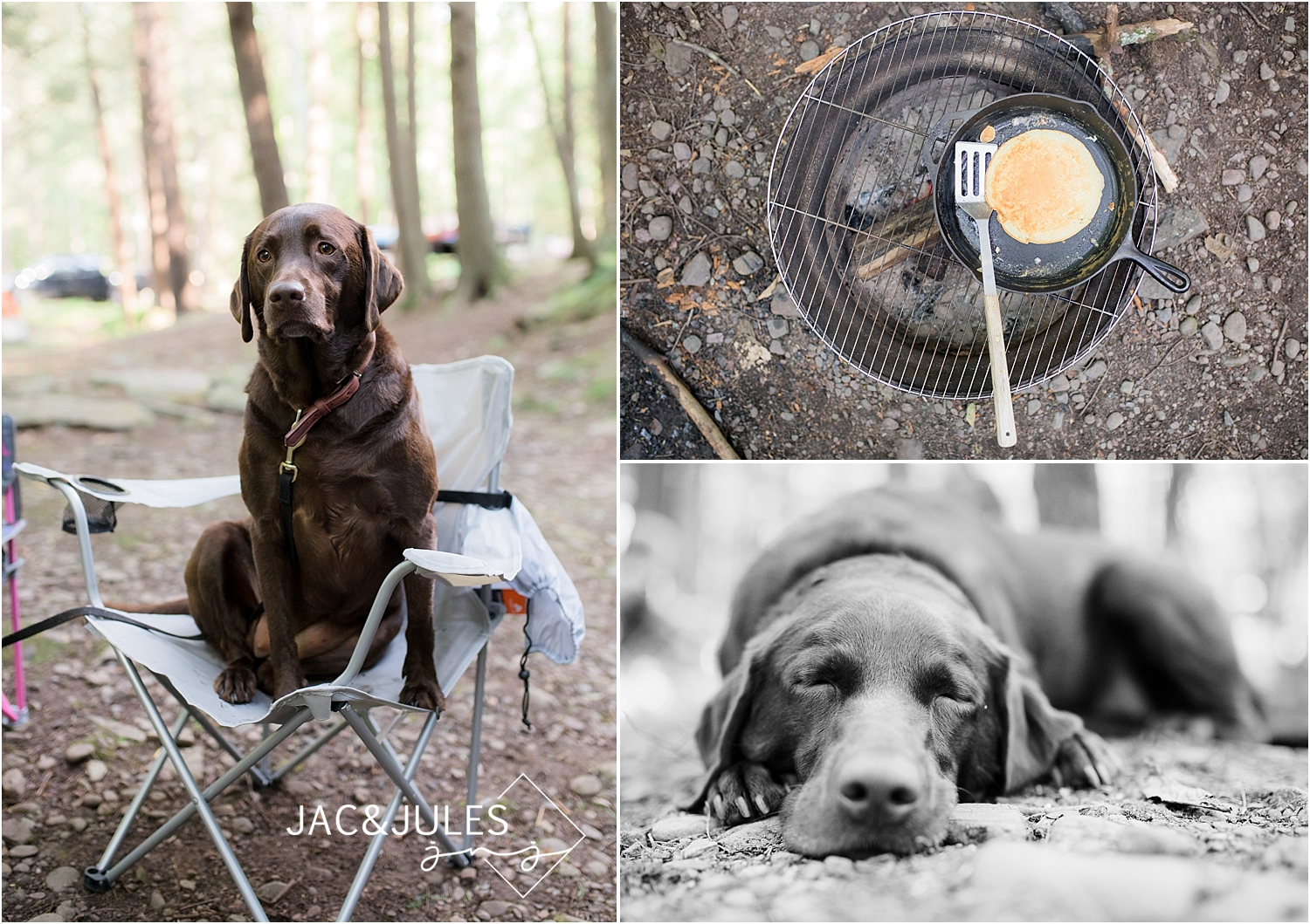 chocolate lab at kittatinny campground