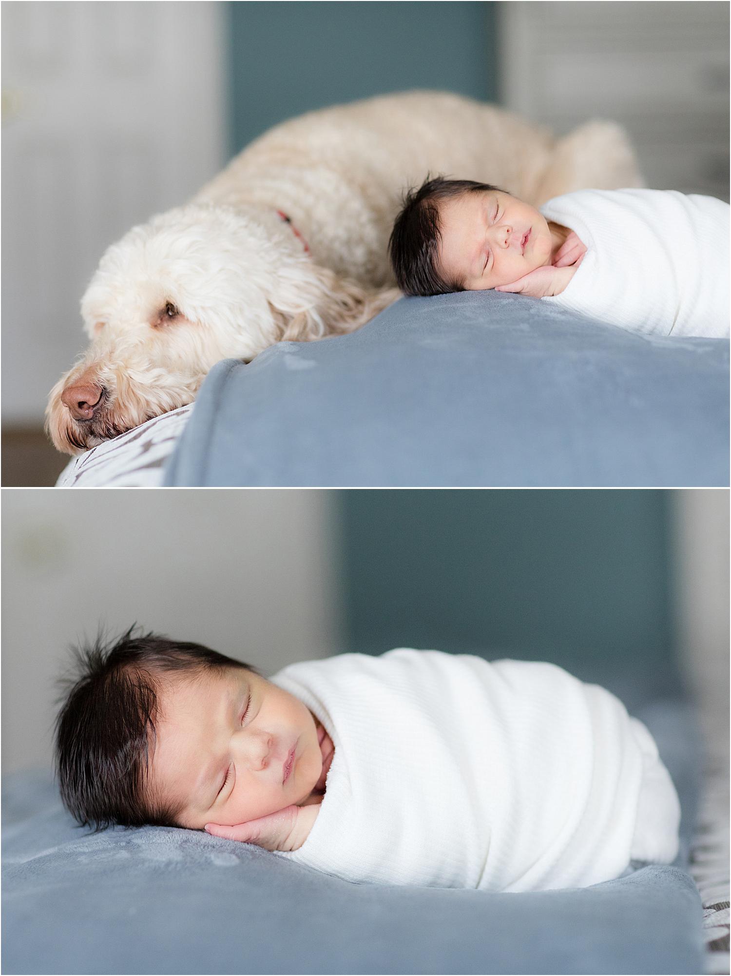 newborn-boy-on-bed-with-dog